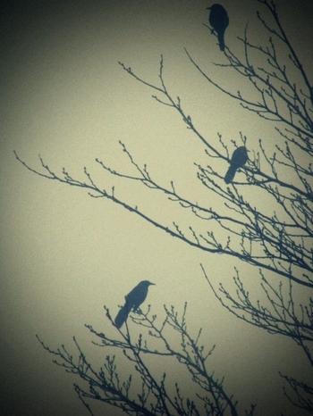 Foggy_birdies